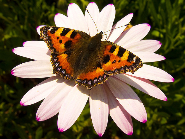 Butterfly - Kostenloses image #277849
