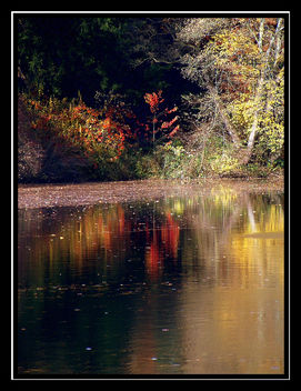reflections - Free image #277929