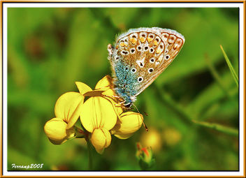EL BUENO - THE GOOD (Mariposa - Butterfly - papallona) - Kostenloses image #278599