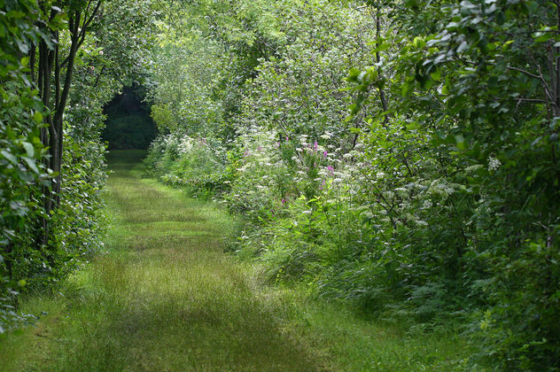 Great Meadows path - Free image #278769