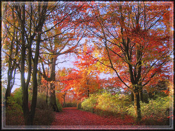 golden_autumn2 - Free image #279059