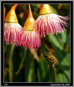 Car wash, Bee size - Kostenloses image #280469