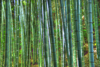 bamboo - Kostenloses image #280719