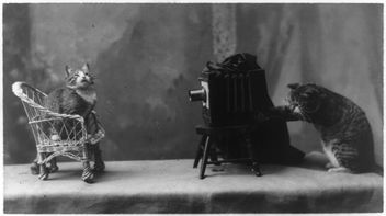 A cat is posed seated on a chair in front of another cat operating a camera. - Free image #281149