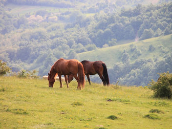 Horses-in-the-Mountains_Landscape__26806 - Kostenloses image #281429