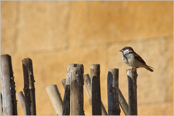 over the edge, jaisalmer - Free image #281569