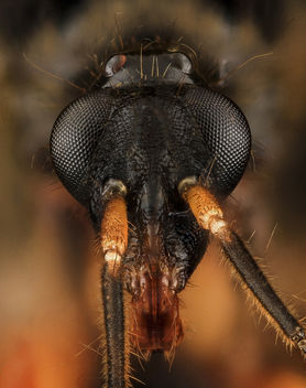 Assassin Bug, head, MD, Upper Marlboro_2013-09-15-13.47.53 ZS PMax - Free image #282019