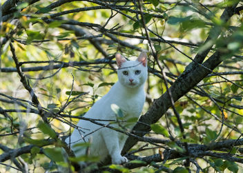 cat in a tree - image gratuit #283319
