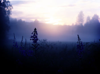 Misty summer night - Free image #284389