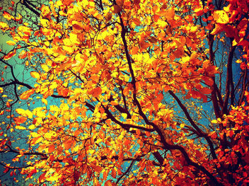 Autum Leaves - Free image #284559