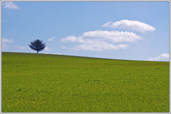 The Tree on the Hill (EXPLORE) - Free image #285029