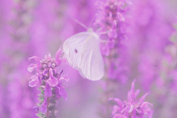 Butterfly Dreams - Free image #285229