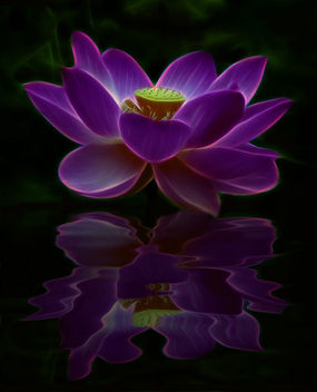 Lotus Fractal Reflection - image gratuit #285489
