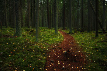 Forest Path - image #285559 gratis