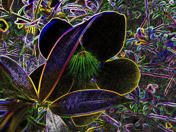 abstract nature - Kostenloses image #285689