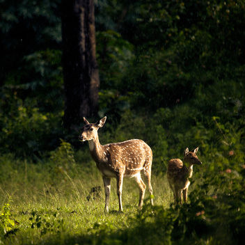 Glowing Deers! - Free image #286419