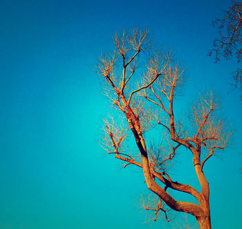 Winter Branches On A Sunny Day - Free image #287779