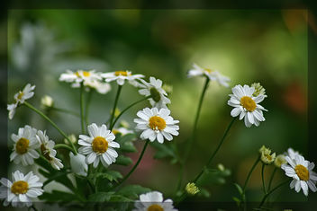 Happy little flowers - image #288519 gratis