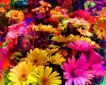 Hot Daisies - Kostenloses image #288779