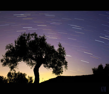 Starlight above olive tree.... - бесплатный image #289159