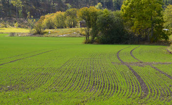 Stripes in a field - image gratuit #289429