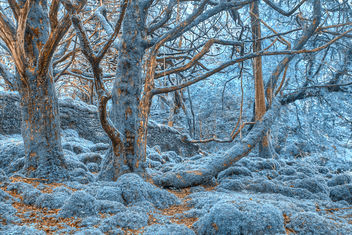 Sapphire Forest - HDR - image #289689 gratis