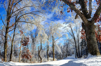 Winter Wonderland - Free image #290519