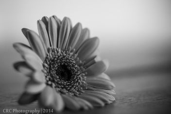Flower on the floor (mono mix) - image gratuit #290629