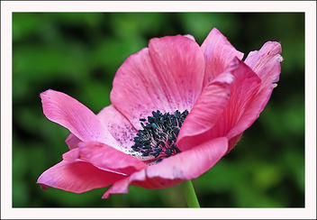 So pink - image #290819 gratis