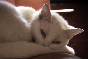 White Cat - image #290829 gratis