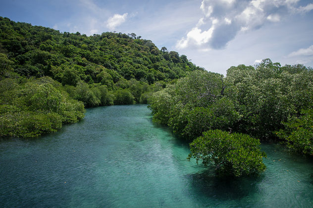 the river (Koh Phi Phi) - Free image #290839