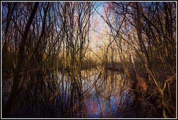 Flooded woodland - image #290939 gratis