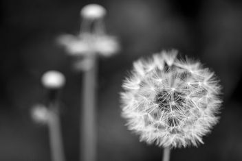 Nature in black & white - image gratuit #291409