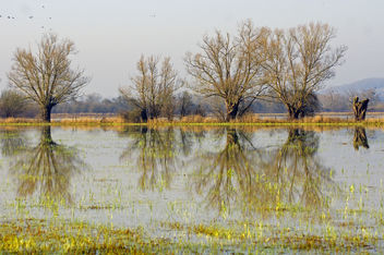Flood Plain, Coombe Hill Nature Reserve, Gloucestershire - Free image #293159