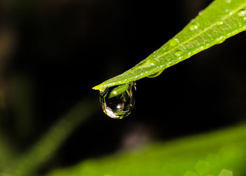 Water drop - Free image #293179