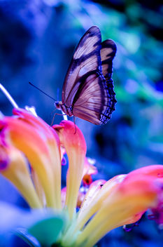 untitled butterfly shot - image #293639 gratis