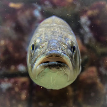 Portrait of a fish - image gratuit #293699
