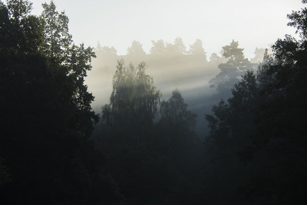 Trees in the sunrise - Kostenloses image #293939