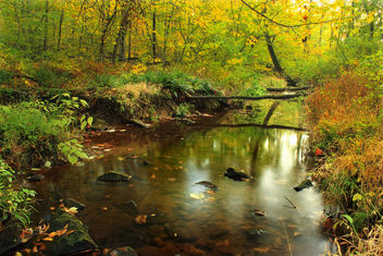 Ruth Zimmerman Natural Area (Autumn Visit) (3) - image gratuit #294249