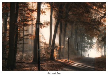Sun and Fog - image gratuit #294869