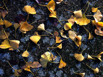 Leaves on tarmac - image gratuit #295059