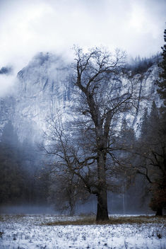 Yosemite Magic - Kostenloses image #295349