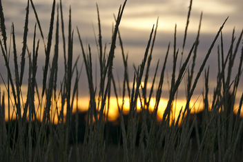Grassland at sunset - image gratuit #296289