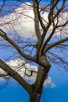 Tree in the Sky - image gratuit #296589