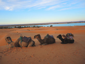 Morocco-resting time for camels - Free image #296739
