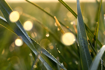 Dew in the first light - image gratuit #297199