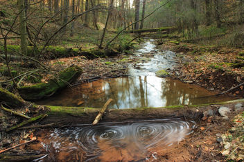 Jakey Hollow Natural Area (Revisit) (2) - image gratuit #297239