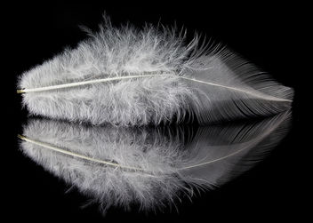 White Feather: Protection - image gratuit #297319