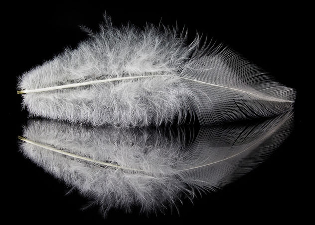 White Feather: Protection - image #297319 gratis