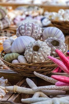 corals in basket close up - image #297489 gratis